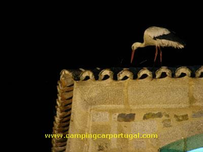 Cáceres – Nem à noite as cegonhas descansam...