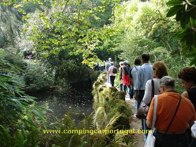 Passando pelo Lago dos Cisnes